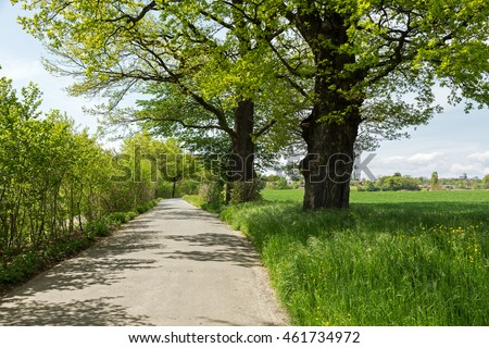 The narrow path between the fields and on both sides grows big and small trees forms the rural landscape on the outskirts of the city of Bern