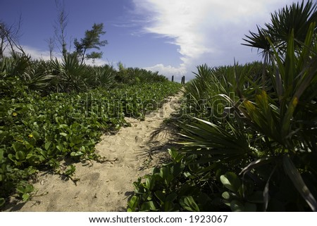 The natural path to the beach - stock photo