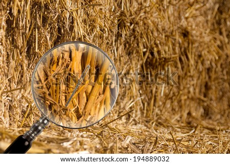 the needle in the haystack - stock photo