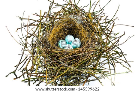 The nest of a Bullfinch with four blue eggs