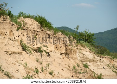 The nests of swallows in a sand quarry - stock photo