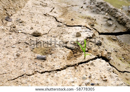 The new life and dry ground - stock photo