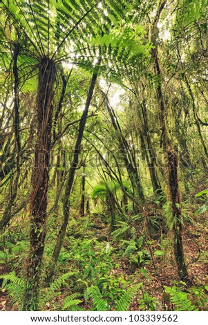 The New Zealand native bush - stock photo