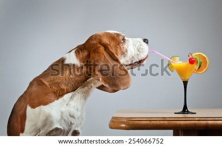 The nice hound drinks a cocktail with fruits - stock photo