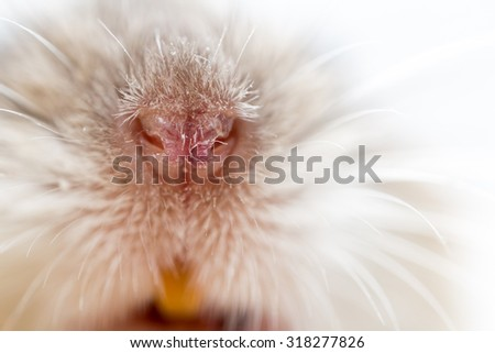 the nose of the mouse. close - stock photo