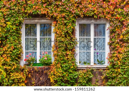 The old house overgrown with vegetation. - stock photo