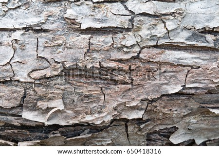 the old part of the tree bark like texture