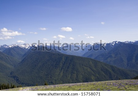 The Olympic Mountains on a summer day from Hurricane Ridge - stock photo