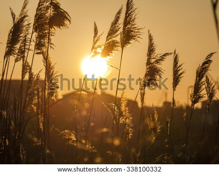 The orange sunset .The sun goes down in the reeds on the beach. Black Sea. Crimea. - stock photo