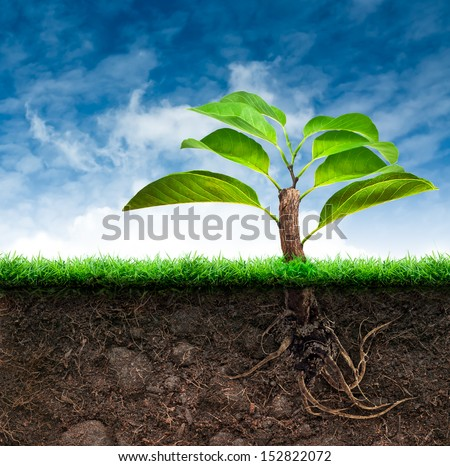The Origin Tree and Soil with Grass in Blue Sky - stock photo