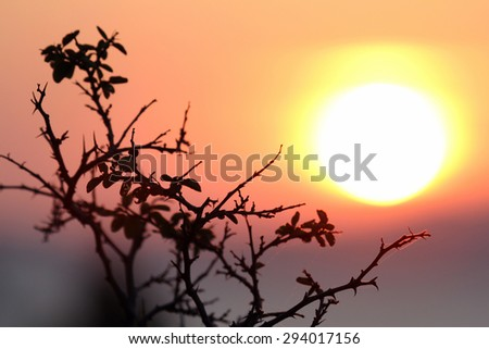 the outline of the leaf of the tree on the background of the dawn