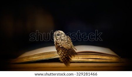 The owl and the old book - stock photo
