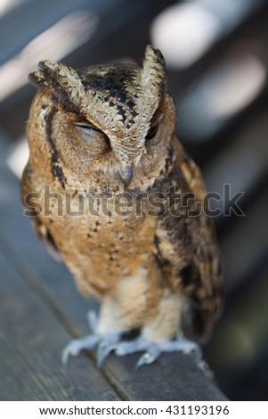 The owl in the zoo in day time. - stock photo