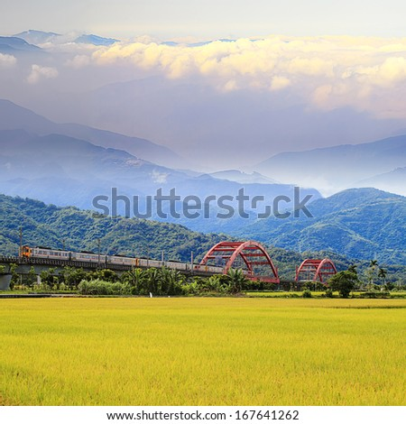 The paddy place with nice background - stock photo