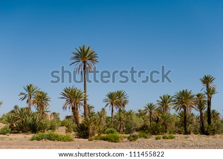 The palm grove near Skoura, Morocco - stock photo