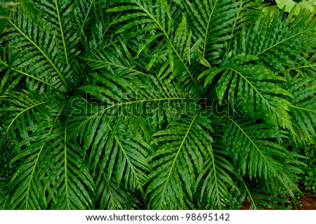 The Palm leaf background - stock photo