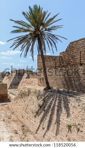 The palm tree grows on the ruins of the ancient Caesarea, Israel - stock photo