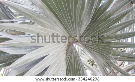 The palm tree textures  on the daylight - stock photo