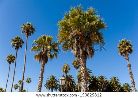 The palm trees under the blue sky - stock photo