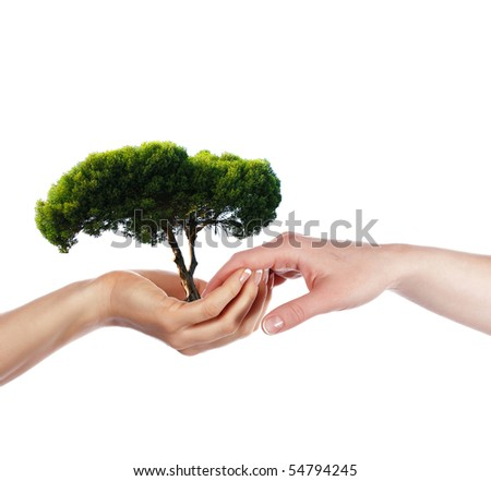 The palms and tree - a symbol of environmental protection - stock photo