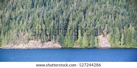 The panoramic view of forest coastline in British Columbia (Canada).