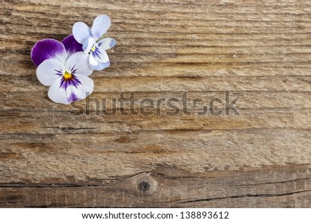 The pansy flowers on wooden background - stock photo