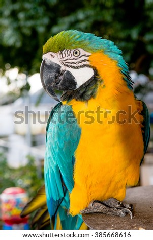 The parrot is on the table and carefully considers the photographer left eye