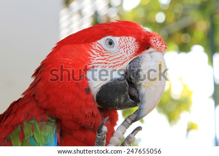 The parrots bird colorful blue macaw sitting on the perch. - stock photo