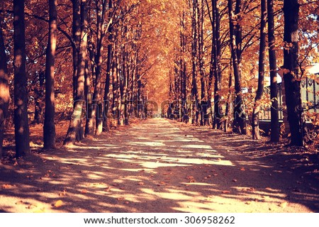 The path in the autumn forest - stock photo