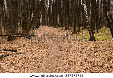 the path in the autumn forest is covered with fallen leaves - stock photo