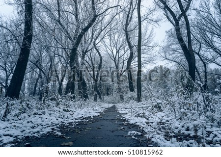 The path in the old abandoned park. Trees covered with snow.