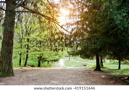 The path of the sun in the forest - stock photo