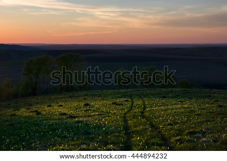 The path on the hill through the meadow with yellow flowers on a background of trees with a wide plain under a colorful pink sky. Altai Mountains, Siberia, Russia. - stock photo