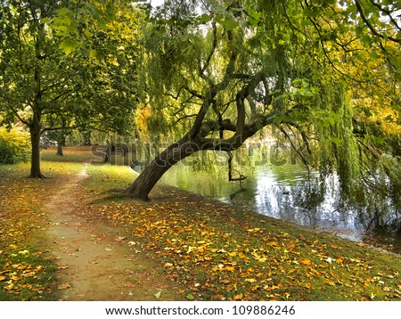 The path runs along the pond. Autumn Forest. Autumn Landscape. - stock photo