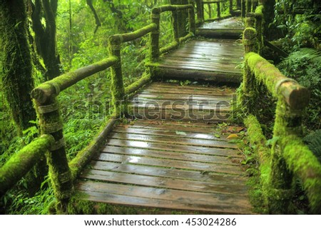 the path way to walk into a tropical rain forest - stock photo