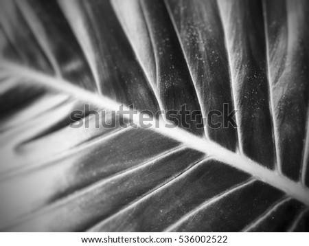 The pattern of  leaf  in black and white for background or wallpaper