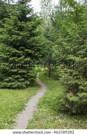 The pedestrian footpath in the wood between trees