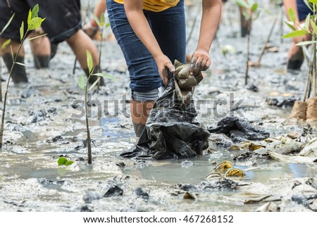 The people plant young tree in deep mud in mangrove reforestation