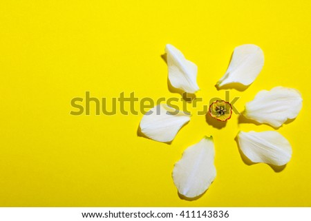 the petals of a white Narcissus on yellow background - stock photo