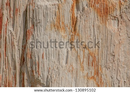 The petrified wood. - stock photo