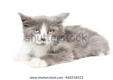 The photo depicts a kitten on a white background