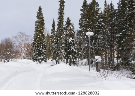 the photo of oad in a wonderful winter forest