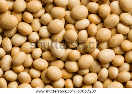 the photo shot of soya beans background - stock photo
