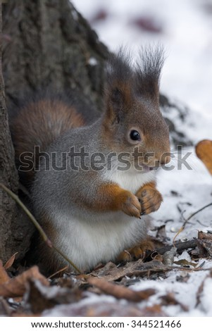 The photograph shows a squirrel near a tree