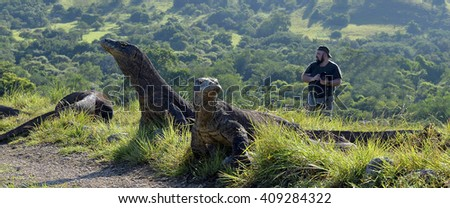 The photographers and Komodo Dragons (Varanus komodoensis) on island Rinca. It is the biggest living lizard in the world, Indonesia - stock photo