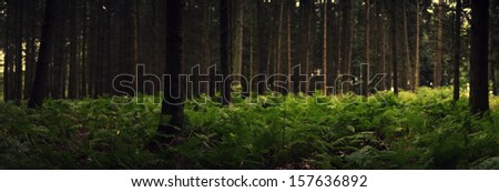 The picture shows a panorama of a forest. - stock photo