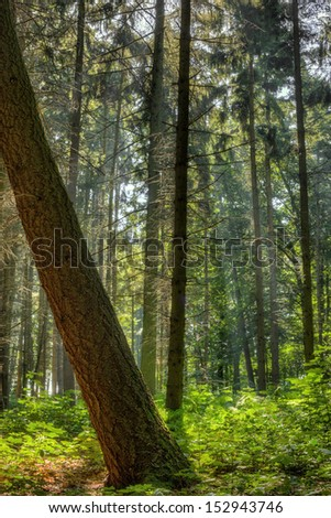 The picture shows a sunny forest. - stock photo