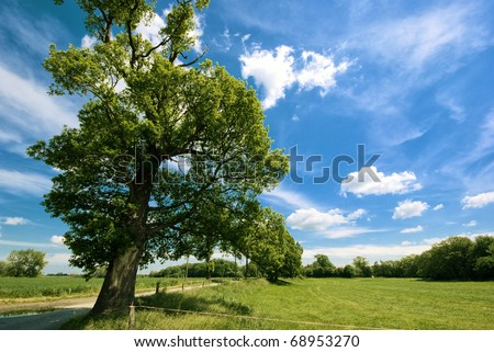 The picture shows a tree, a meadow and a sunny, blue sky. - stock photo
