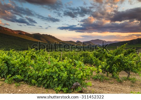 The picturesque landscape with vineyards against mountains. - stock photo