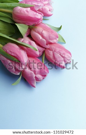 The pink tulips on a blue background